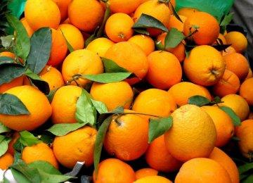 Warning Against Contraband Oranges