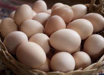Egg Exports Up 20%