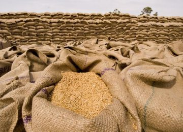 Plan to Produce 11m Tons of Wheat