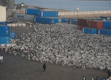 Livestock Export Tariff Eliminated