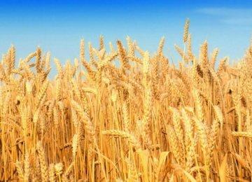 Iran Imports More Wheat