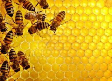 Ardabil Honey of High Quality