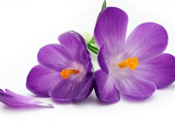 Saffron News