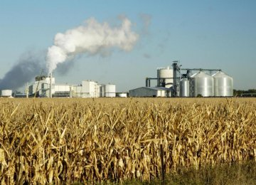 Domestic Biofuel Production Possible