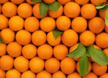 Orange Farmers Upbeat About This Year's Yield