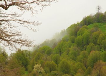 FRWO Opposes Road in Cloud Forest