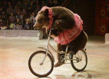 Circus Animal Abuse