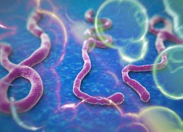 One Year  of Ebola