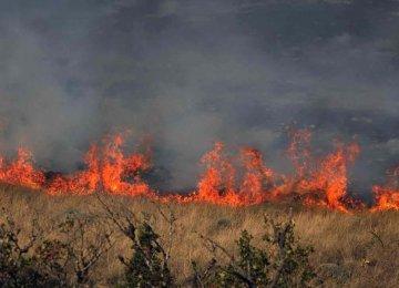 Fires in Golestan National Park