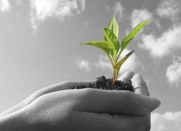 Environmental NGOs in Provinces