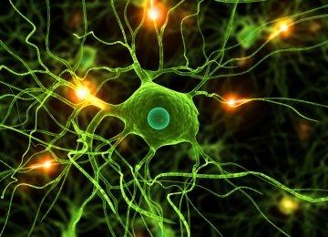 Stem Cell 'Breakthrough' in Parkinson's Disease