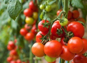 Pesticide Risks