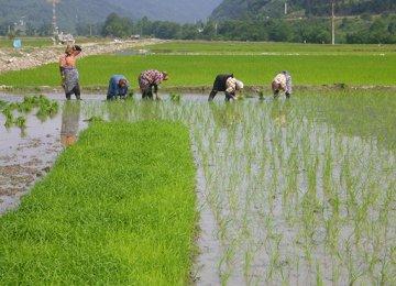 Comprehensive Plan for Rural Women
