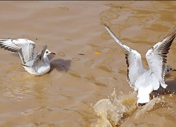 White Bridge Hosts White Birds