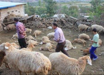 Wild Wolf Menace in North Khorasan Villages