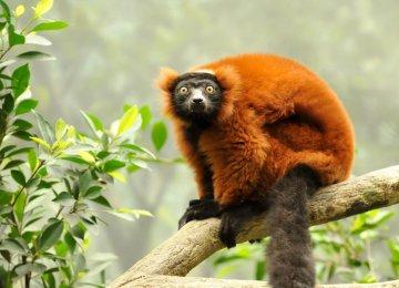 Earth Has Lost Half its Wildlife, Says WWF