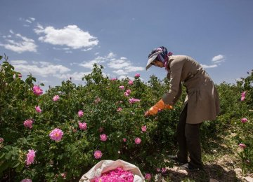 Flower Exports Need Incentives