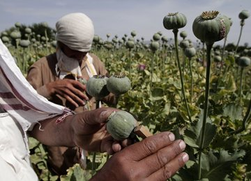 Iran Ready to Help Afghans Substitute Poppy