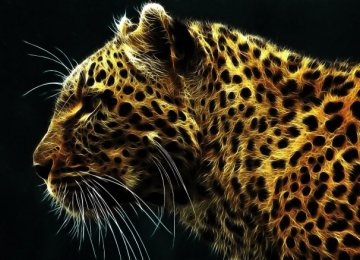 Poacher Jailed for Killing Leopard