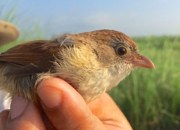 'Extinct' Bird Rediscovered