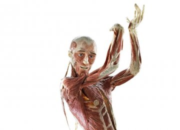 Human Bodies, Body Parts on Display