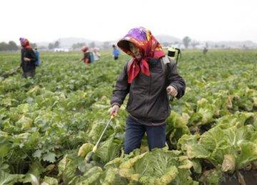 N. Korea 2014 Harvest Best Since Mid-1990s