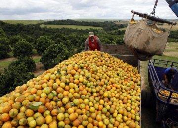 Brazil's July Economic Activity Above Forecast