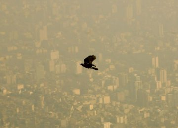 Air Pollution Damaging  to Brains