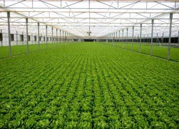 Startup Gives Fresh Impetus  to Greenhouse Farming