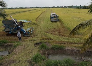 Thailand to Regain Top Rice Exporter Spot