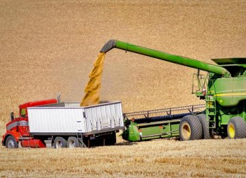 Fears of Wheat Slump Spurs Buying