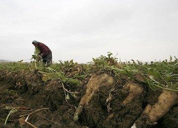 Sustainable Agriculture Around  Lake Urumia