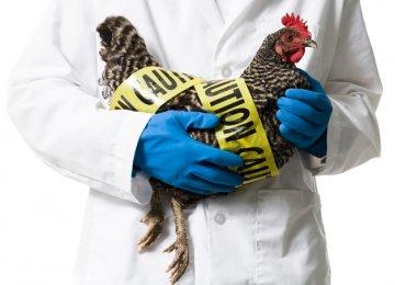 Avian Flu in Tehran Province