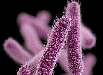 No Cases of Cholera