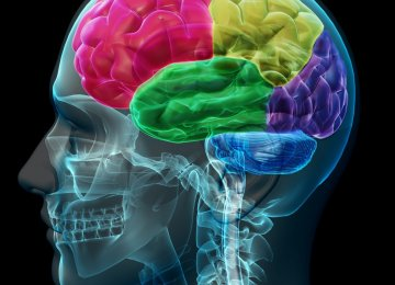 Neuroscience Congress