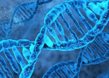 Genetic Testing Vital in  Consanguineous Marriages