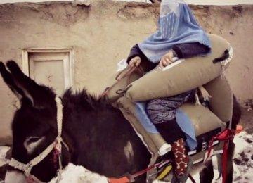 Donkey Seatbelts for Pregnant Women
