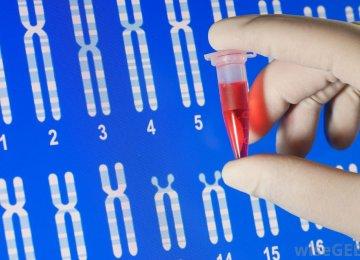 Premarital Screening and Genetic Counseling