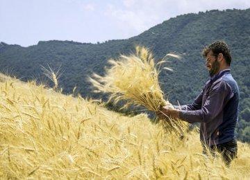 Farm Crops Insurance