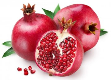 Pomegranate Harvest