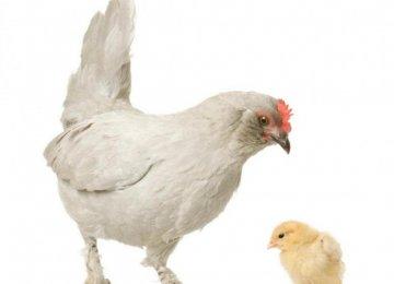 Poultry Consumption