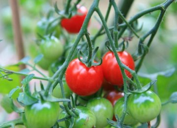 Crop Substitution to Check Farm Losses