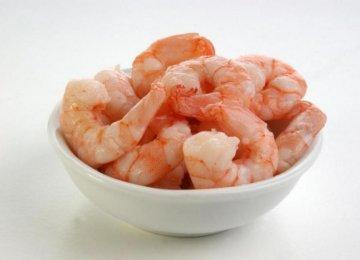 800m Shrimps Harvested  in Hormozgan
