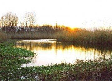 New Fear of Anzali Wetland