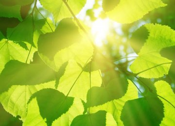 Artificial Photosynthesis Could Solve CO2 Emission Problem