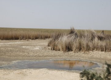 Experts Question Wetland Conservation Bill