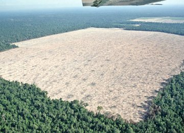 Deforestation Rate Alarming