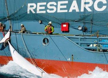 Japan Will Resume Whaling