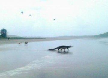 Goa Crocodile Controversy Blamed on Rivals