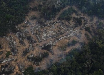 Deforestation Worsens in Amazon Rainforest